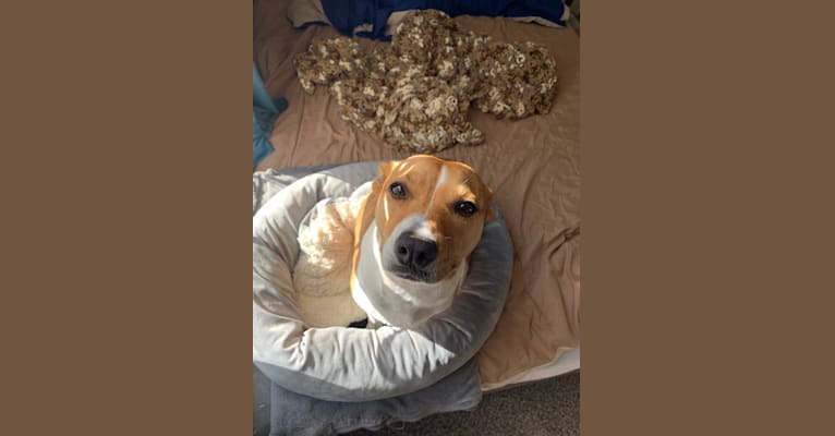 Photo of Lucy, an American Pit Bull Terrier  in Mobile, Alabama, USA