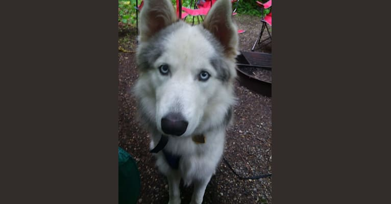 Photo of Nova, a   in Yelm, WA, USA