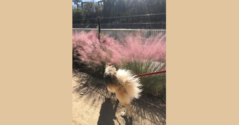 Photo of Nia, a   in Los Angeles, California, USA
