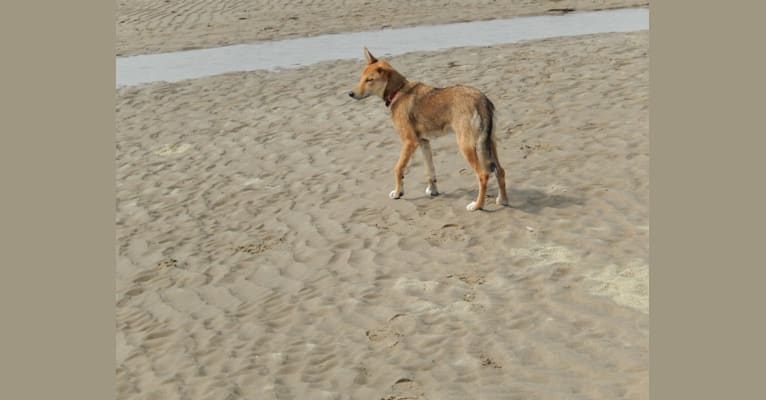 Photo of Ziva (ET), a Border Collie, Alaskan-type Husky, and Siberian Husky mix in Nederland