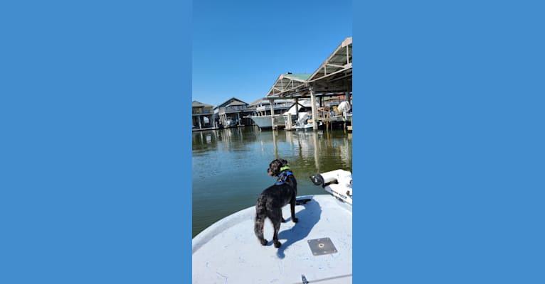 Photo of We call him Zeke, a Miniature Schnauzer, Lhasa Apso, Pomeranian, Shih Tzu, Dachshund, and Miniature Pinscher mix in Port Mansfield, Texas, USA