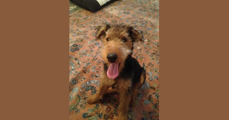 Photo of Howitzer, a Welsh Terrier  in Brumley, MO, USA