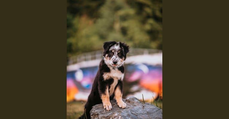 Photo of Marin, a Border Collie mix in Washington, USA