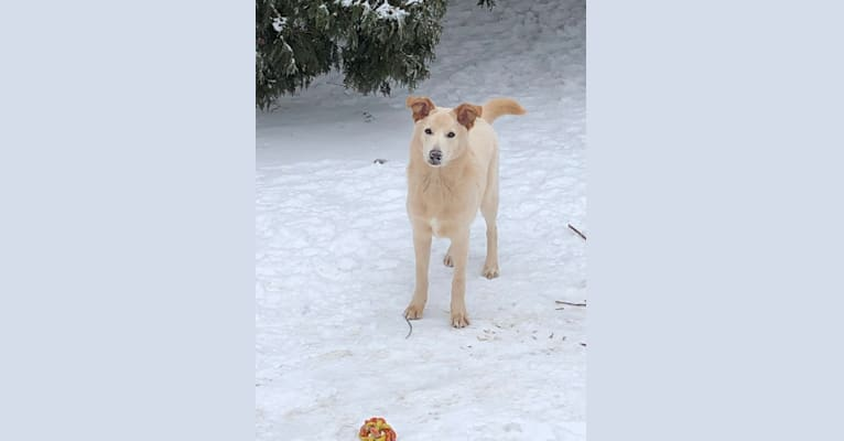 Photo of Samwise, a German Shepherd Dog, Australian Cattle Dog, and Mixed mix in Sycamore, Illinois, USA