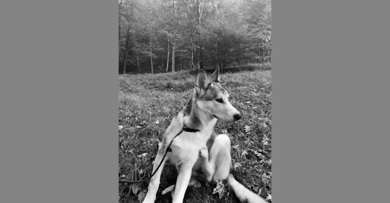 Photo of Nuke, a