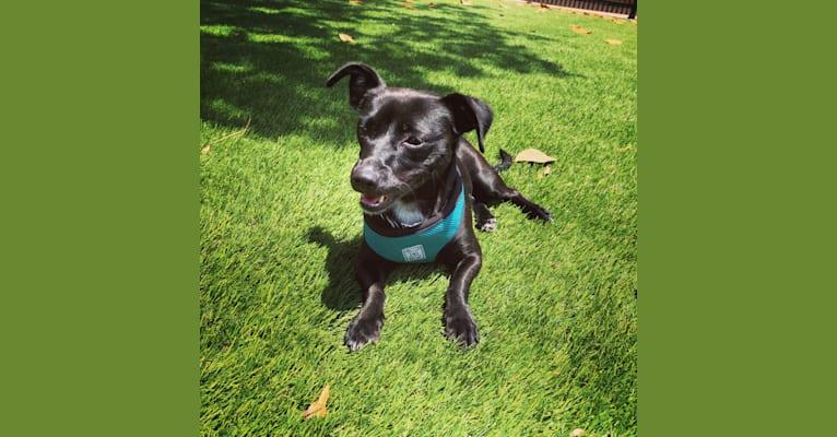 Photo of Hazel, a Chihuahua, Poodle (Small), Pekingese, and Pomeranian mix in San Bruno, California, USA