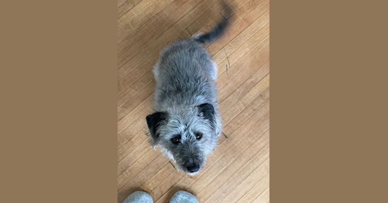 Photo of Kaija, a Poodle (Small), Dachshund, and Mixed mix in Mississippi, USA