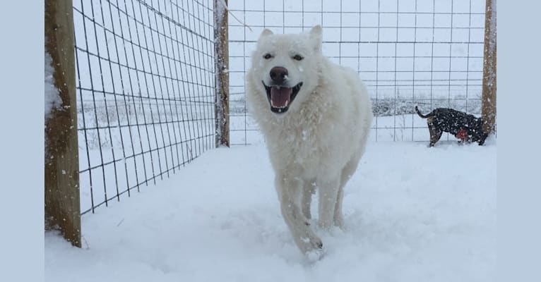 Photo of Albus, a   in Woodland Park, CO, USA