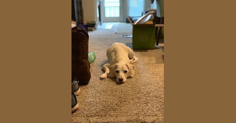 Photo of Eira, a Cocker Spaniel, Beagle, German Shepherd Dog, and Mixed mix in Livingston, NJ, USA