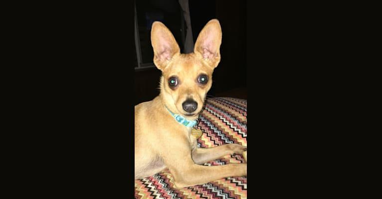 Photo of Jac, an American Village Dog