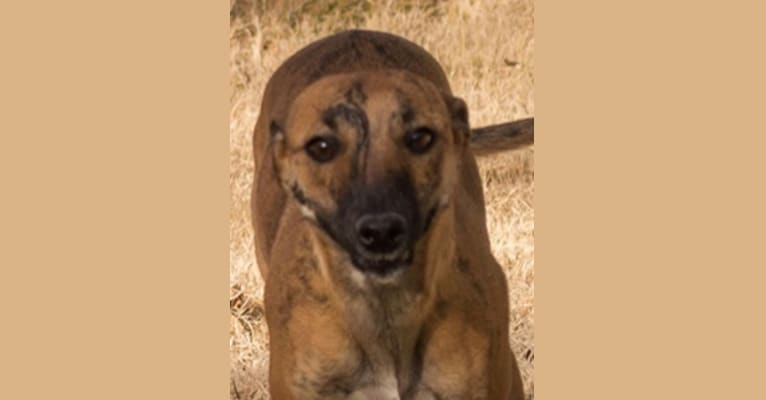 Photo of Kishi, a Border Collie, Whippet, Russell-type Terrier, and Border Terrier mix in Pahrump, NV, USA