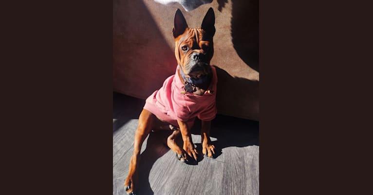 Photo of Wilson, a Chinese Chongqing Dog  in Texas, USA