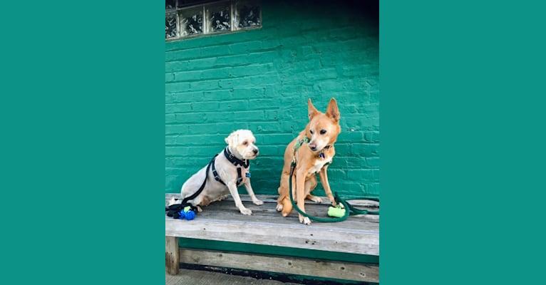 Photo of Aidan, a Chihuahua, German Shepherd Dog, Boxer, Cocker Spaniel, and Mixed mix in Punta Santiago, Humacao, Puerto Rico, Humacao, Puerto Rico
