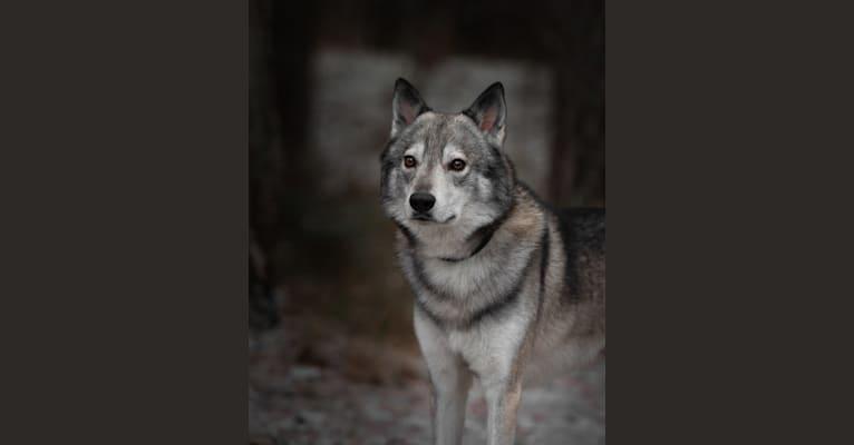 Photo of Rakki, a   in Iisalmi, Finland