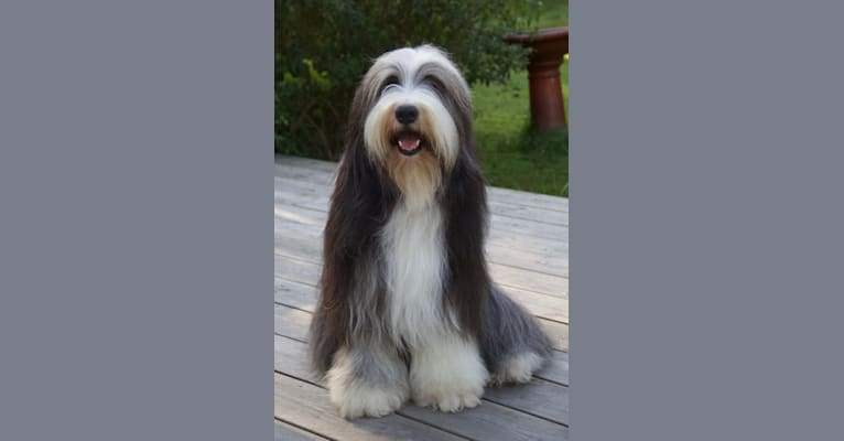 Photo of Mymlan, a Bearded Collie  in Tystberga, Sverige