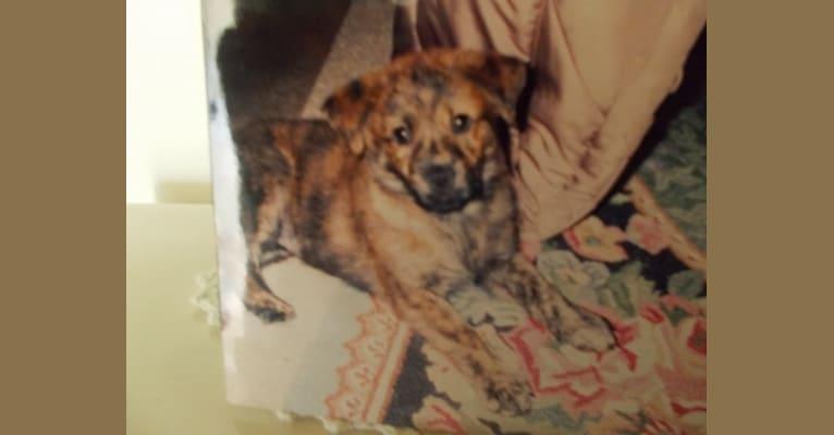 Photo of Keno, a Labrador Retriever, Boxer, Chow Chow, and German Shepherd Dog mix in Norfolk, Virginia, USA