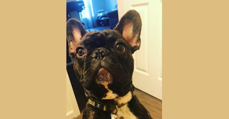 Photo of Zeus, a French Bulldog  in Miami, FL, USA