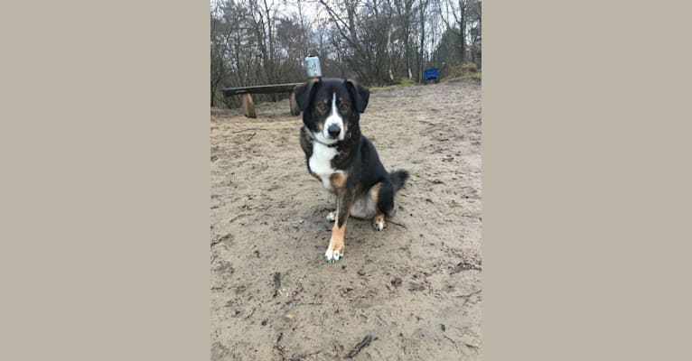 Photo of Manni, an European Village Dog