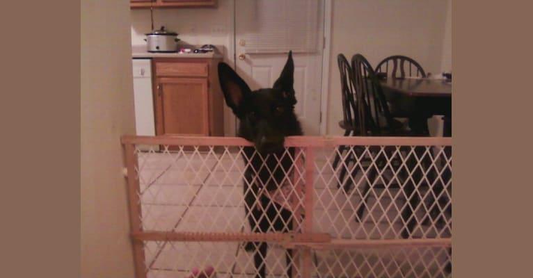 Photo of Roxy, a German Shepherd Dog  in South Dakota, USA