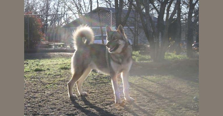 Photo of Tikaani, a   in Alabama, USA