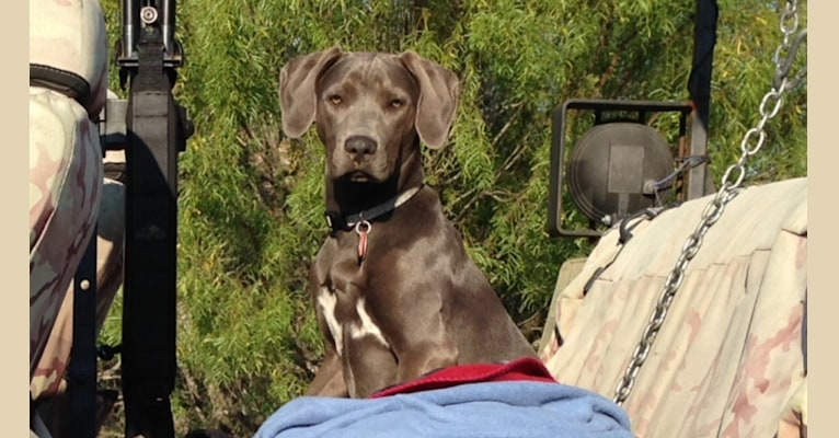 Photo of Blue Girl, a Blue Lacy