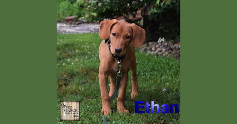 Photo of Ethan, a Rottweiler, American Pit Bull Terrier, German Shepherd Dog, and Mixed mix in St. Thomas, U.S. Virgin Islands