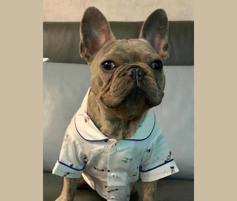 Photo of Romeo, a French Bulldog  in 香港