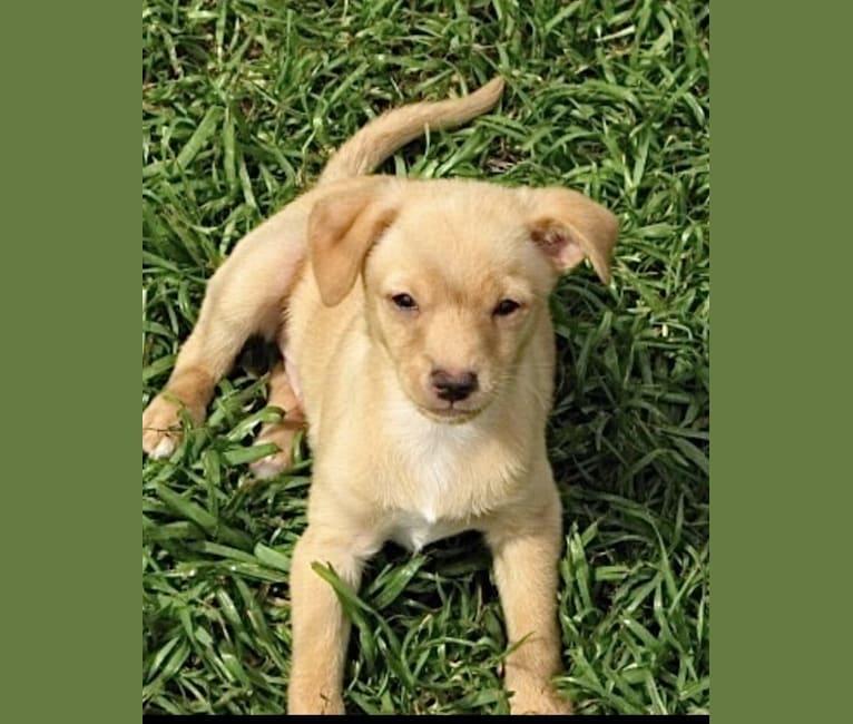 Photo of Joey Corona, a Chihuahua, Pomeranian, Rat Terrier, Dachshund, Lhasa Apso, and Mixed mix in Alabama, USA
