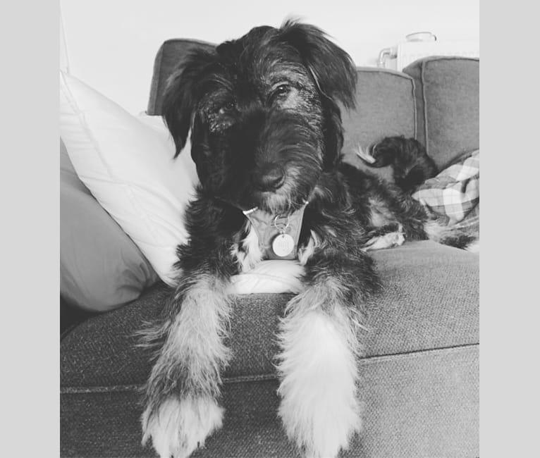 Photo of Tilly, an Eastern European Village Dog  in Romania