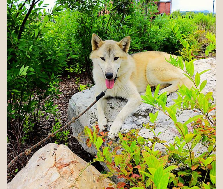 Photo of Arya, a