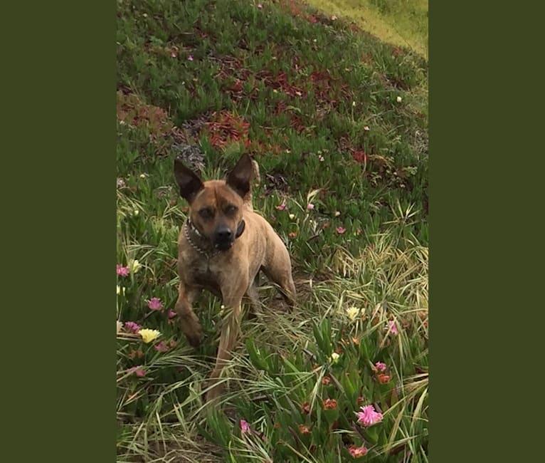 Photo of Punkin, a Formosan Mountain Dog  in Taiwan