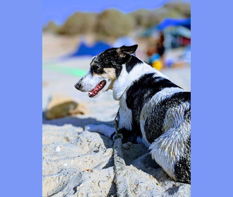 Photo of Arya, an Arabian Village Dog  in Philadelphia, Pennsylvania, USA