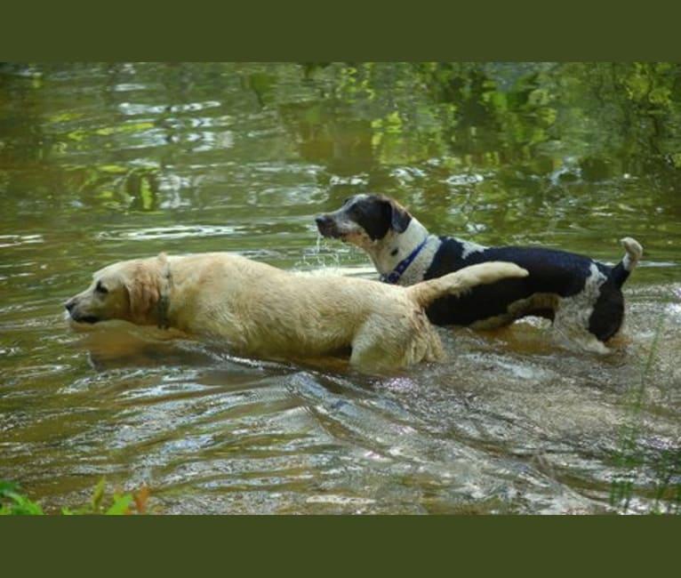 Photo of Gunner, a German Shepherd Dog, Labrador Retriever, Beagle, American Pit Bull Terrier, and Golden Retriever mix in Georgia, USA