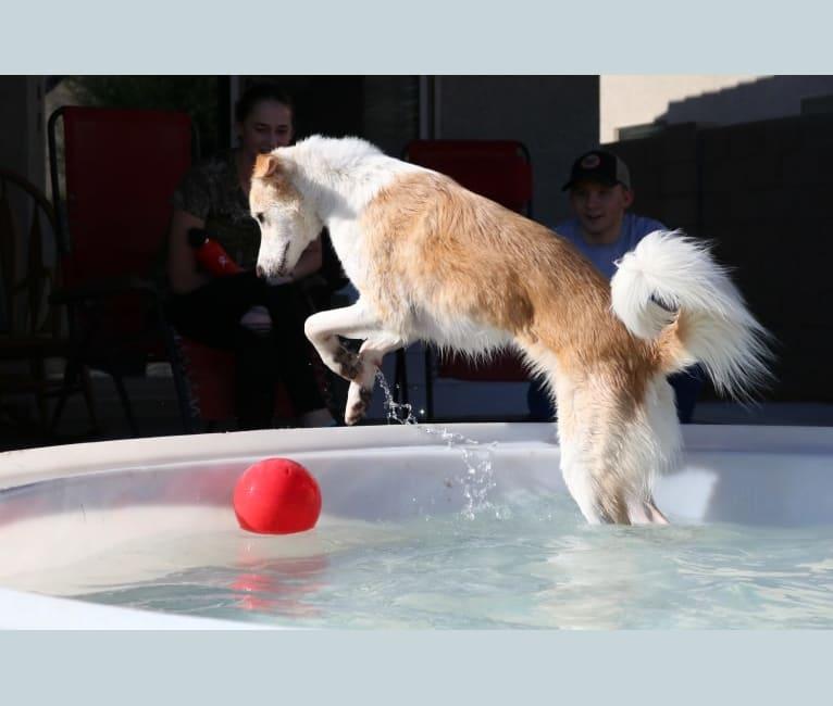 Photo of Kona, an Arabian Village Dog  in Iraq