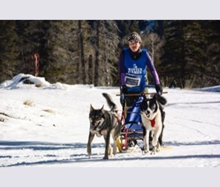 Photo of Kiera, an Alaskan-type Husky, German Shepherd Dog, and Siberian Husky mix in Arizona, USA
