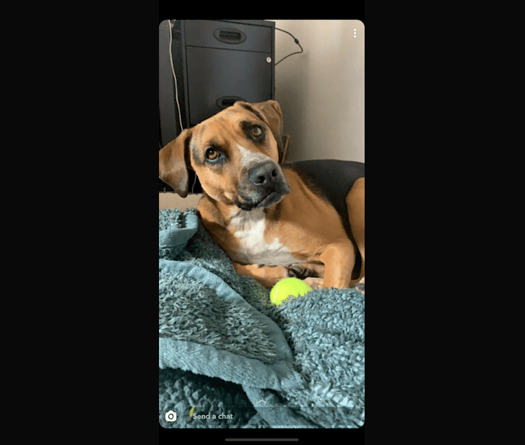 Photo of Watson, a Mountain Cur, American Pit Bull Terrier, Boxer, and Mixed mix in Arkansas, USA
