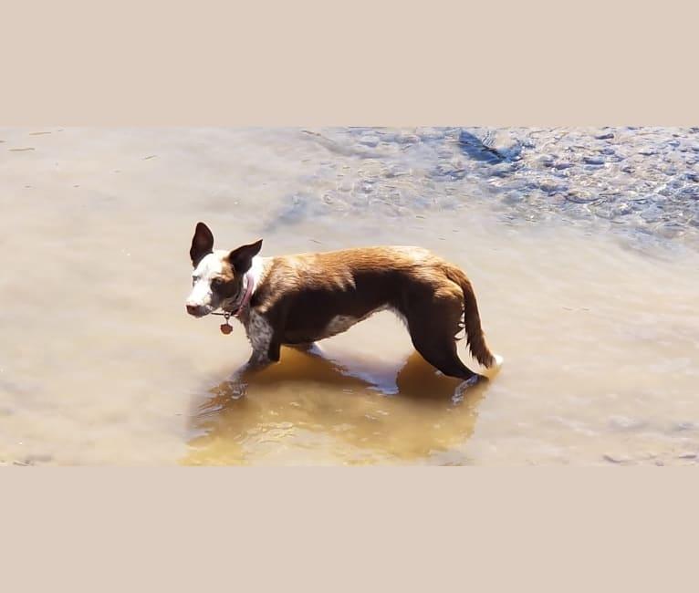 Photo of Molly, a McNab  in Alturas, California, USA