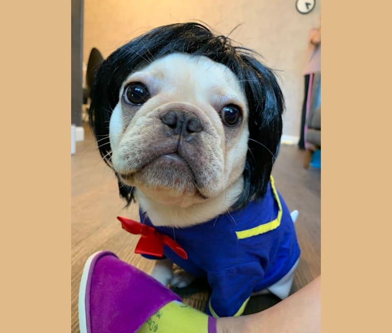 Photo of Julio, a French Bulldog  in 香港
