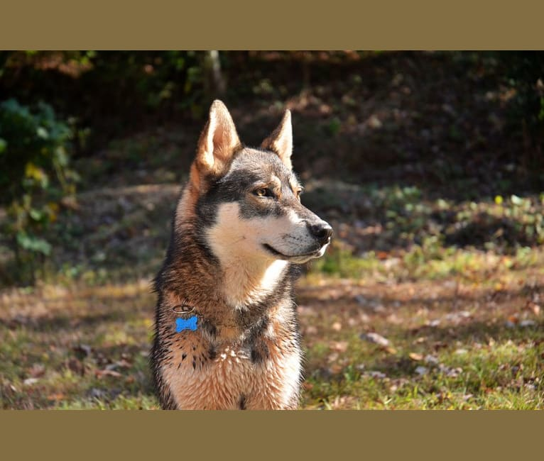 Photo of Levi, a   in Marion, NC, USA