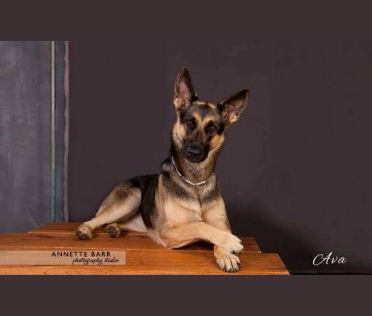 Photo of Ava Lynch, a German Shepherd Dog  in Indiana, USA