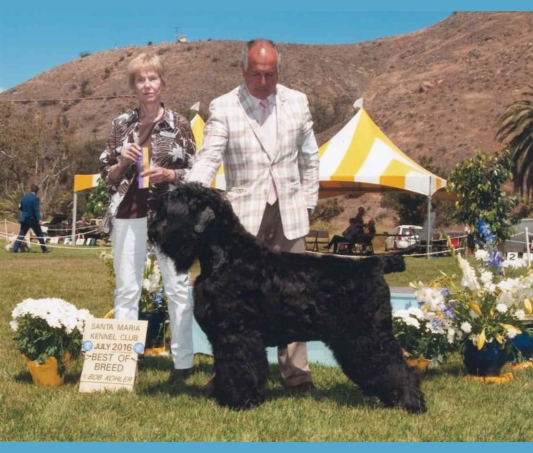 Photo of Thatch, a Black Russian Terrier