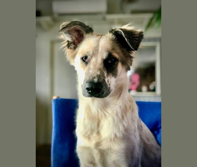 Photo of Sami, an Eastern European Village Dog  in Bosnien-Herzegovina