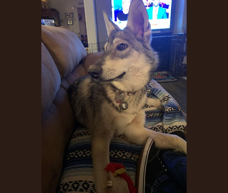 Photo of Timber, a   in Tucson, AZ, USA