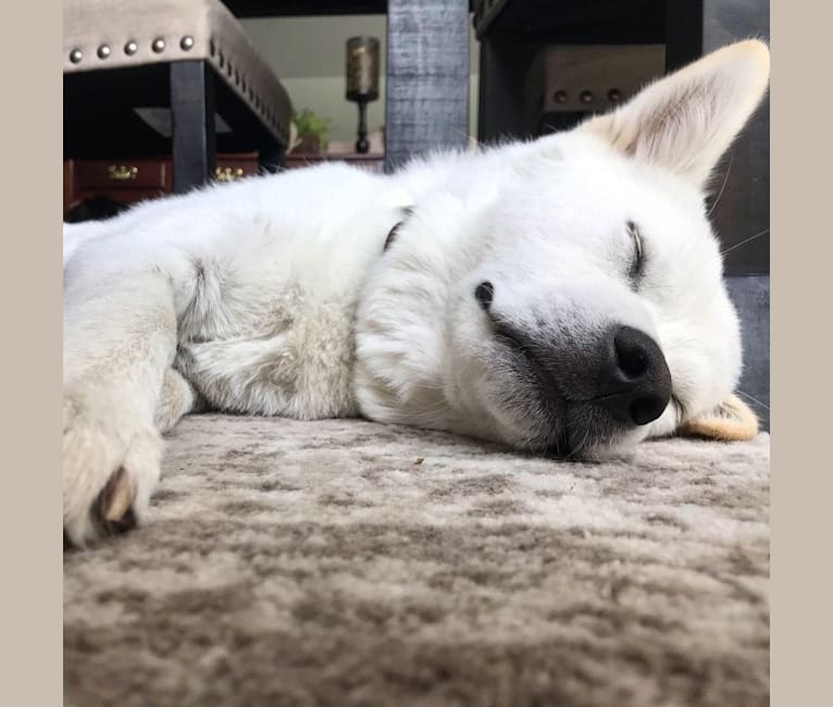 Photo of Link, a Japanese and Korean Village Dog  in South Korea