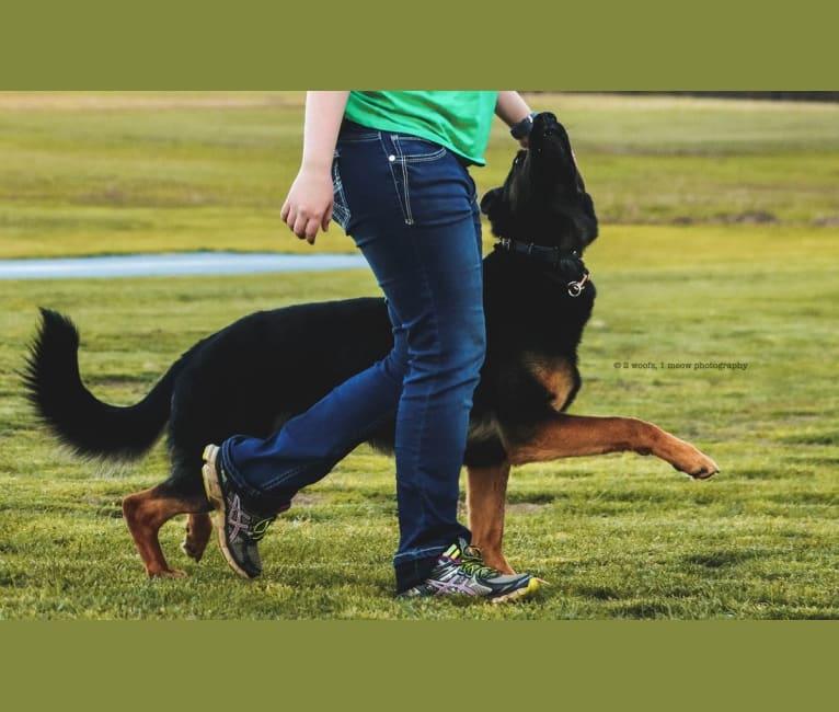 Photo of Canon, a German Shepherd Dog  in North Carolina, USA