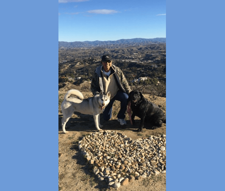 Photo of Lucy, a Labrador Retriever  in San Diego, CA, USA