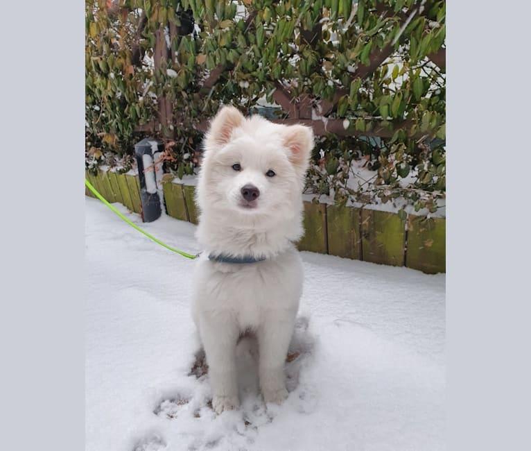 Photo of Luna, a Japanese and Korean Village Dog  in Paju-si, Gyeonggi-do, South Korea