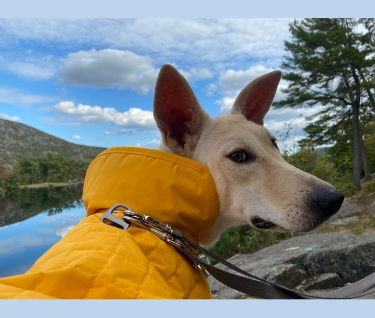 Photo of Hazel, a Formosan Mountain Dog  in Taiwan