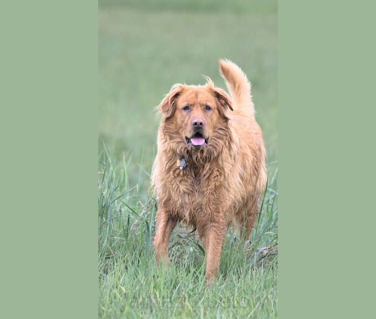 Photo of Milo, a Labrador Retriever, German Shepherd Dog, and Mixed mix in Klawock, Alaska, USA