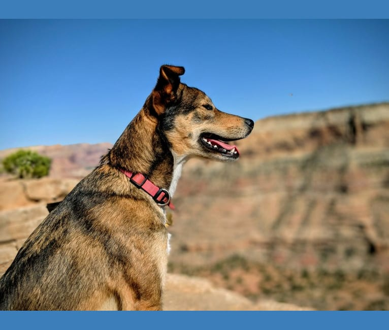 Photo of Gilly, a Labrador Retriever and American Pit Bull Terrier mix in Kayenta, Arizona, USA